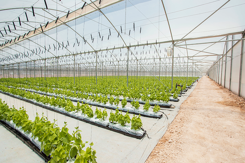 Largest Organic Greenhouse In Central America Agvisors